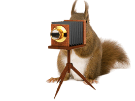 The Clearly Inventory Squirrel using an old fashioned camera