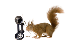 A phone and squirrel illustrate how you can contact Clearly Inventory